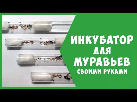 Инкубатор для муравьев своими руками / Будни мирмикипера