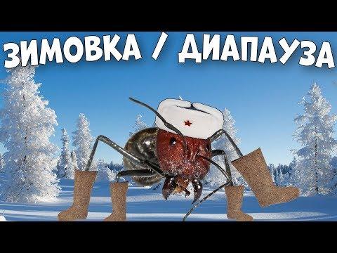 Как провести зимовку муравьиной колонии и что такое диапауза