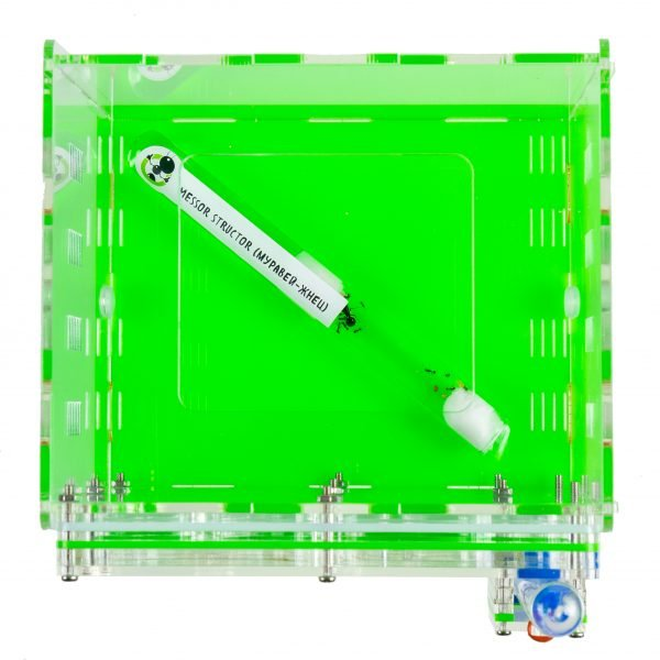 Муравьиная ферма «Зеленый куб» + муравьи
