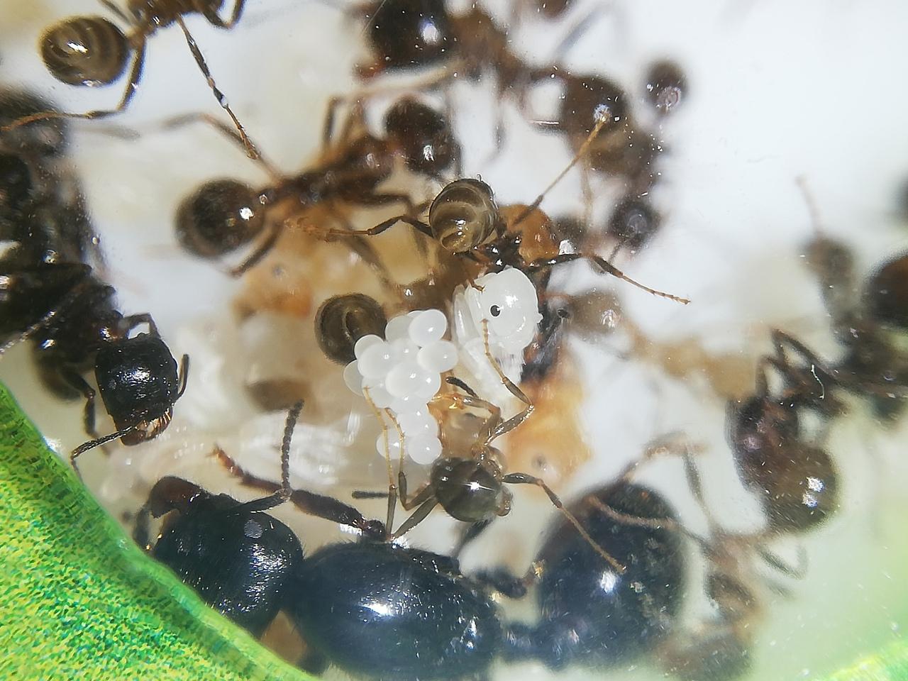 макро фото муравьев
