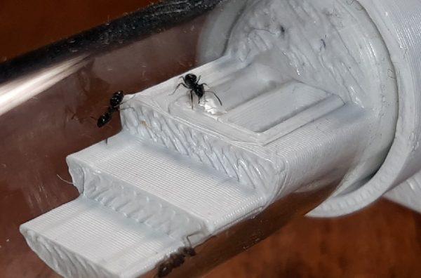 Система удобного кормления муравьев